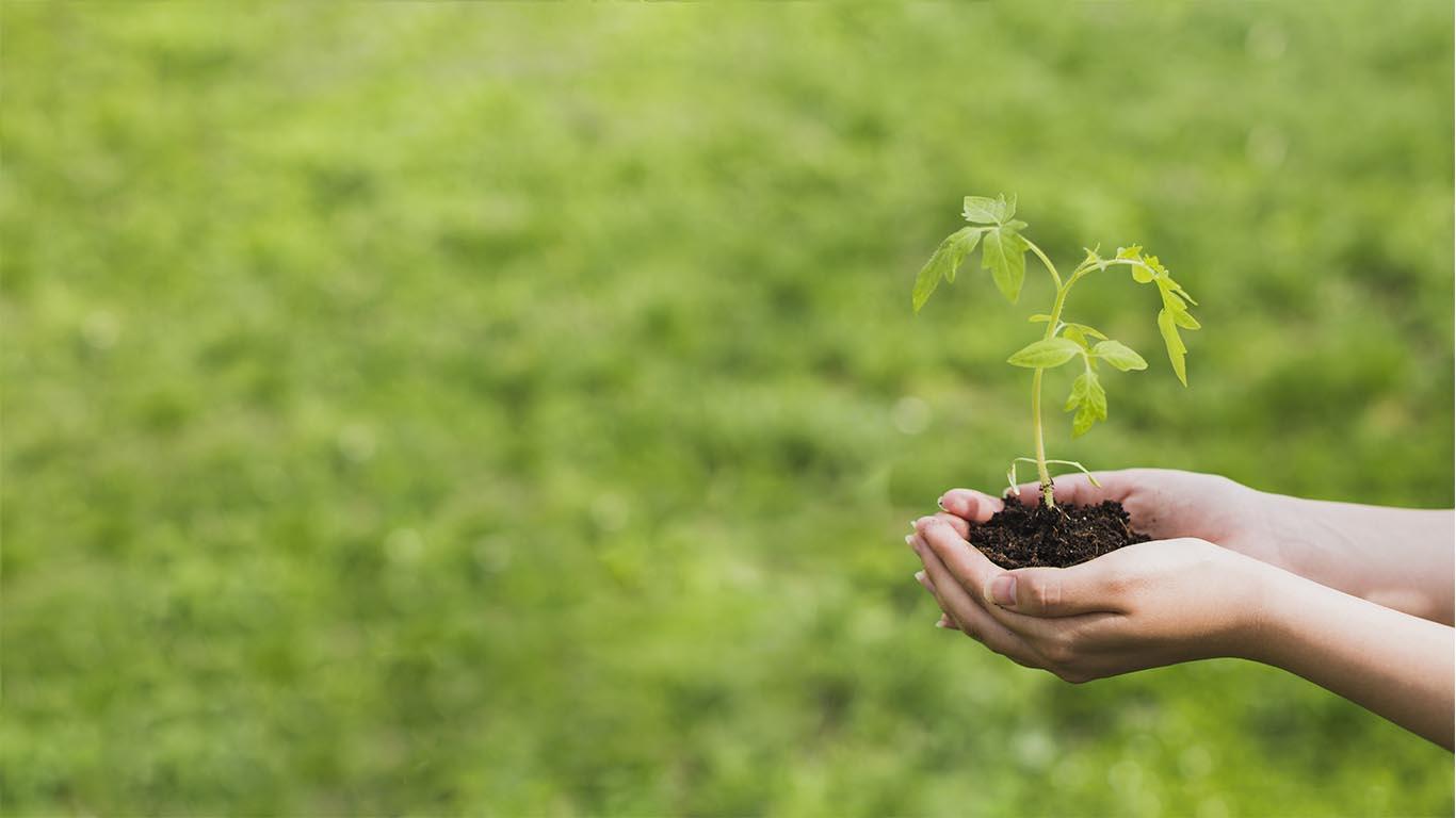 termoformados-banyeres-planta-ecologia-importancia-envases-ecologicos